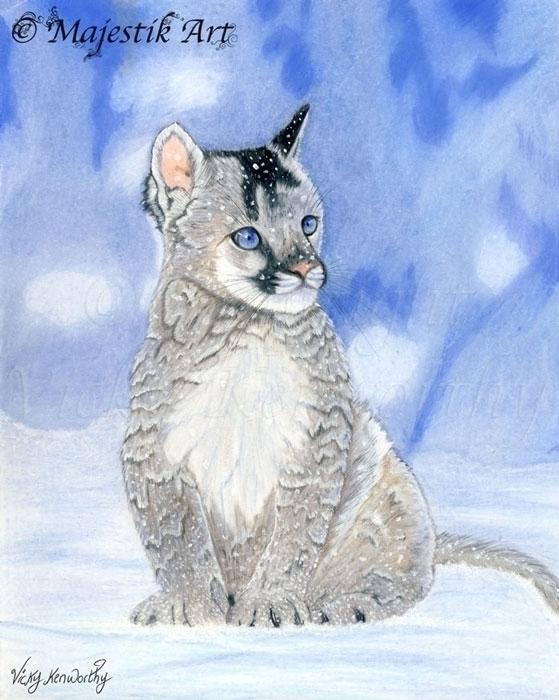 Serene - MountainLion, Cub, Snow - majestikart | ello
