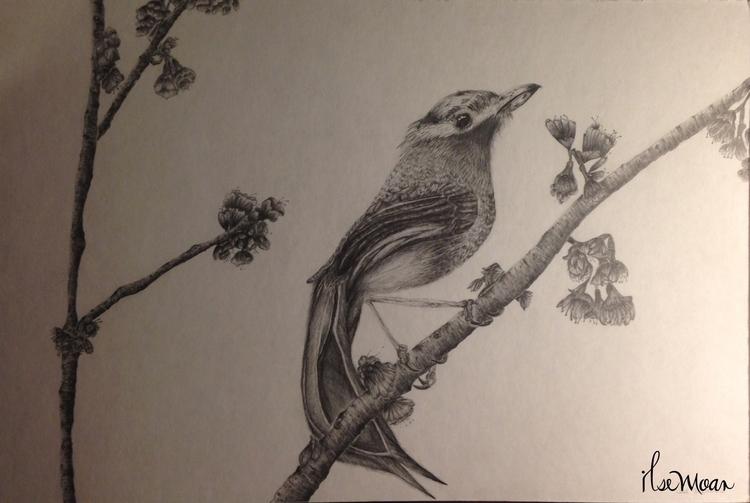 BIRD CHERRY TREE - illustration - ilsemoar | ello