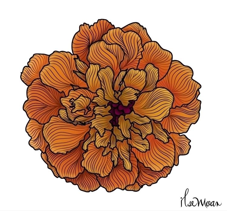 CEMPASUCHIL FLOWER - digitalillustration - ilsemoar   ello
