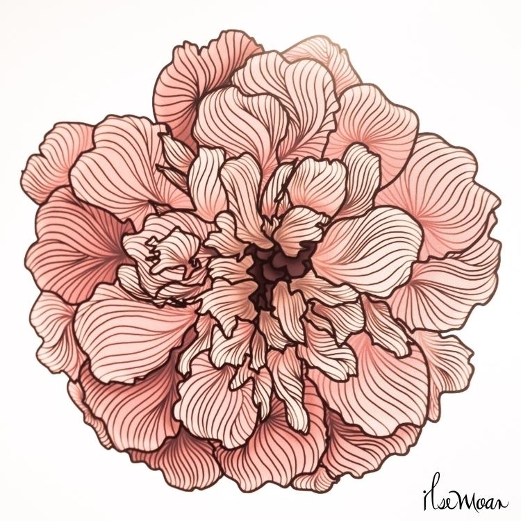 CEMPASUCHIL FLOWER COLOR - digitalillustration - ilsemoar | ello
