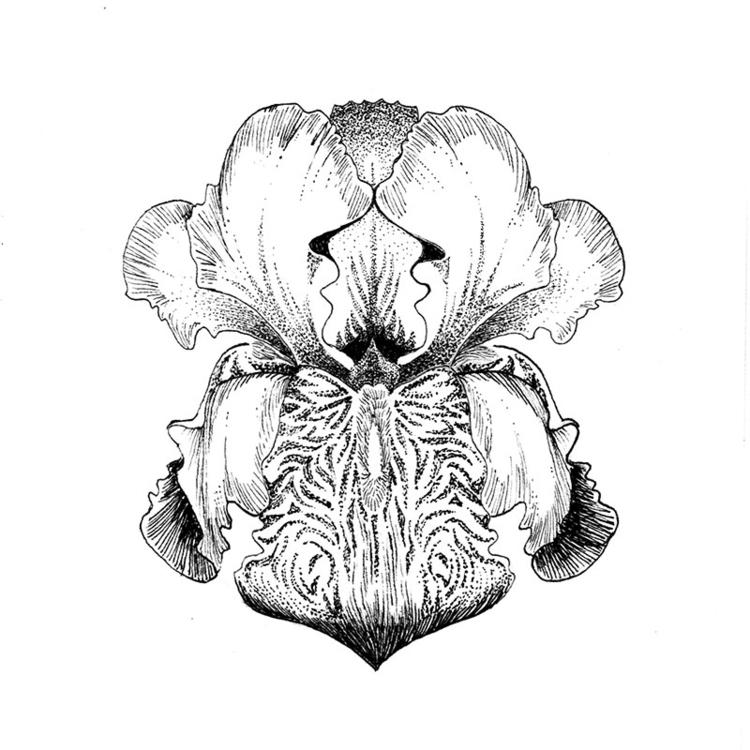 Iris - illustration, drawing, #flowers - karolina-4327 | ello