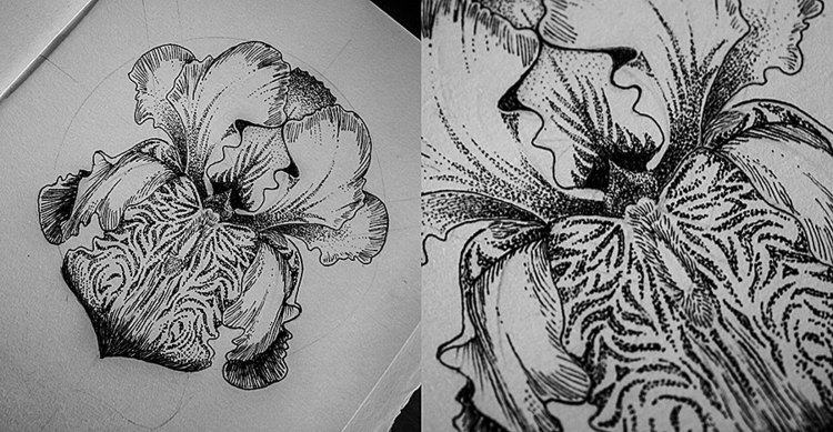 Iris - illustration, drawing - karolina-4327 | ello