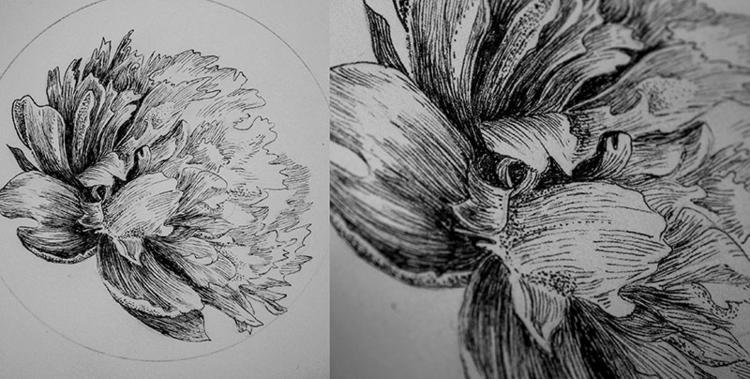Peony - illustration, drawing, #flowers - karolina-4327 | ello