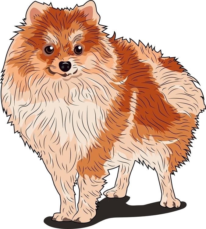 Pomeranian - dog, vector - itsamebry | ello