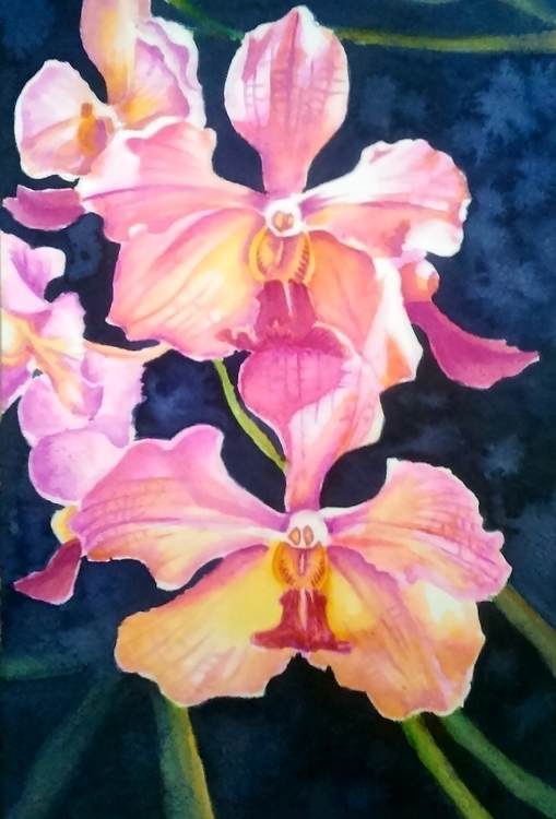 Orchids II Watercolor Strathmor - mjastudillo | ello
