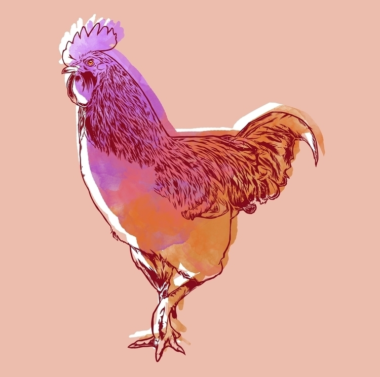 illustration, rooster - amywiseman | ello