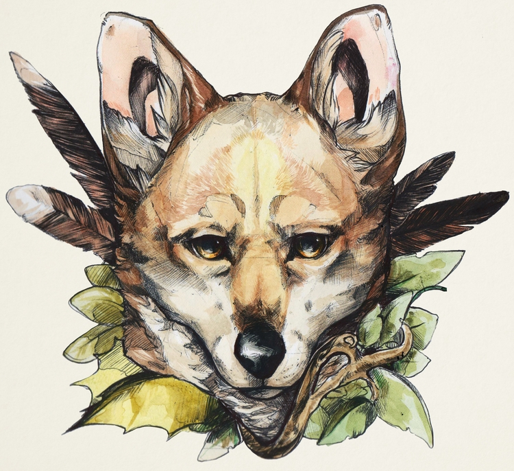 coyote, animal, canid, canine - uru-1113 | ello