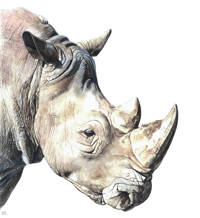 RHINO - illustration, painting, animals - anne-1202 | ello