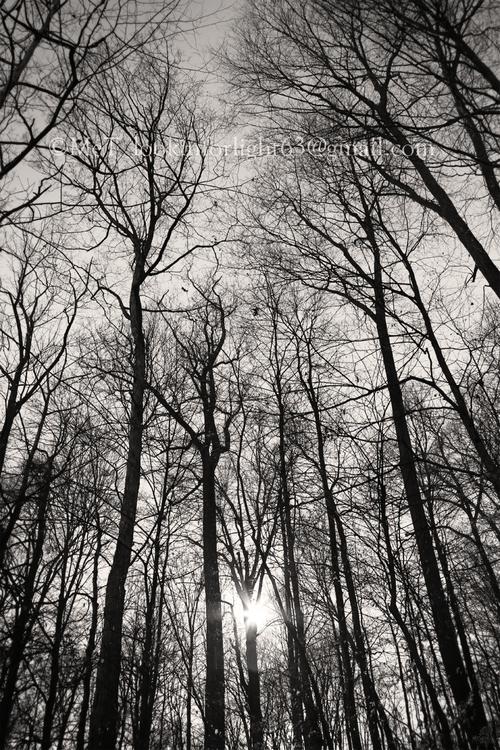 Winter Woods sunlight - winter, wintertreessunlight - lookinforlight   ello