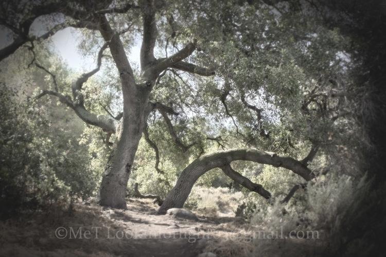 Tree Couple - trees, treecouple - lookinforlight | ello