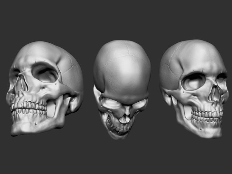 Skull - zbrush, skull, study, 3d - janderson-7361 | ello