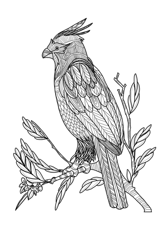 bird (coloring book - illustration - soso-6104 | ello