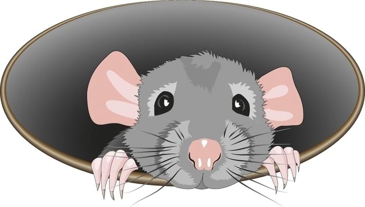 shy rat - cgkx   ello