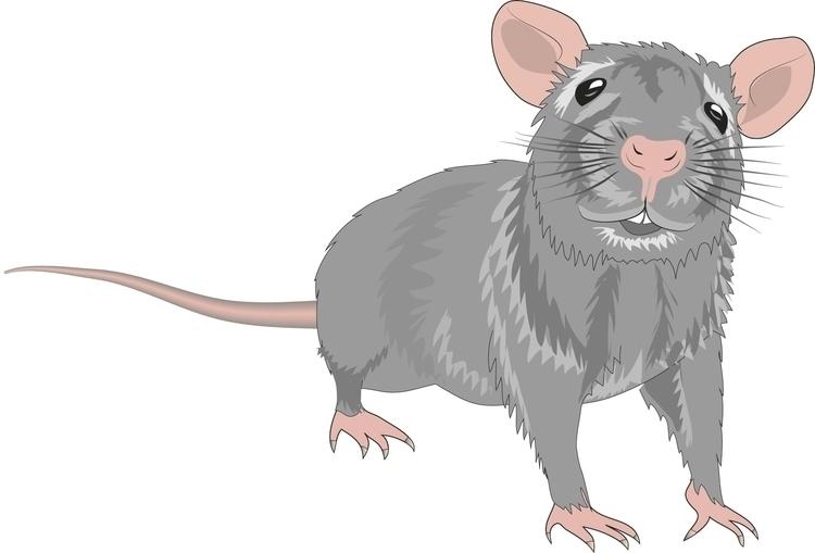 Rat - cgkx   ello