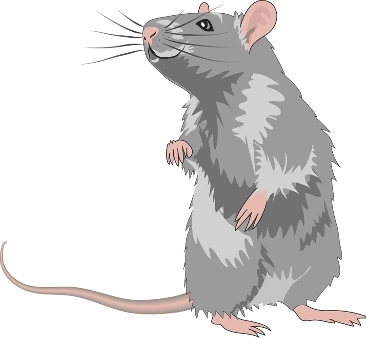 rat - cgkx | ello