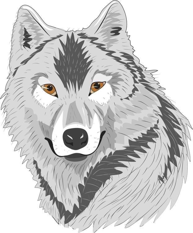 wolf - cgkx | ello