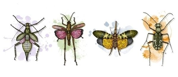 Entomology - illustration, drawing - akumimpi | ello