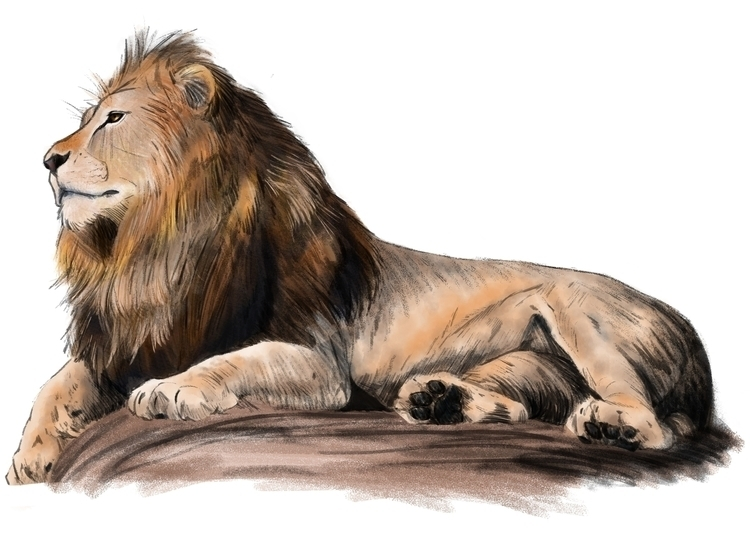 Lion sketch - hope30789 | ello