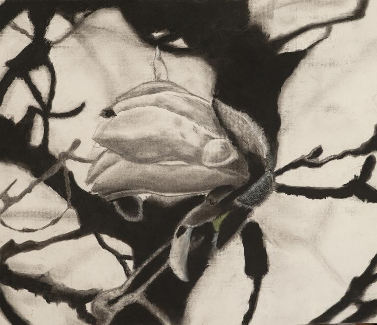 Blooming Essence - charcoal, drawing - jlebedev | ello