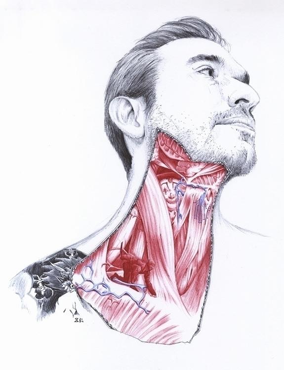 Anatomy - portrait, man, anatomy - zasa-6052 | ello