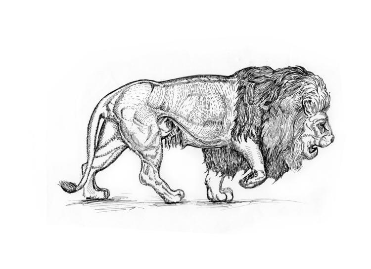 Prowling Lion - lion, illustration - rebeccalee-1135 | ello