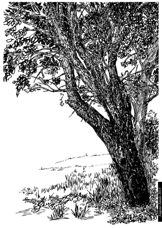 N15 - illustration - sarychev | ello