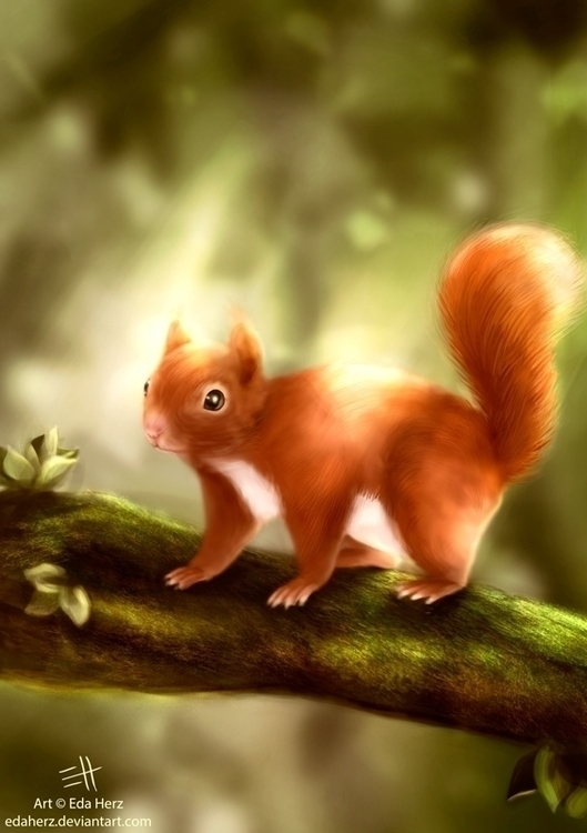 Red Squirrel - illustration, digitalart - edaherz | ello