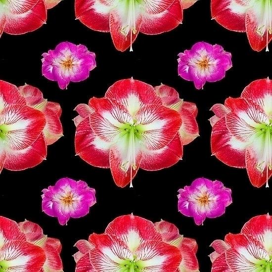Pattern red white Amaryllis blo - leo_brix | ello
