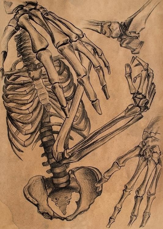 series works study anatomy comp - danteed | ello