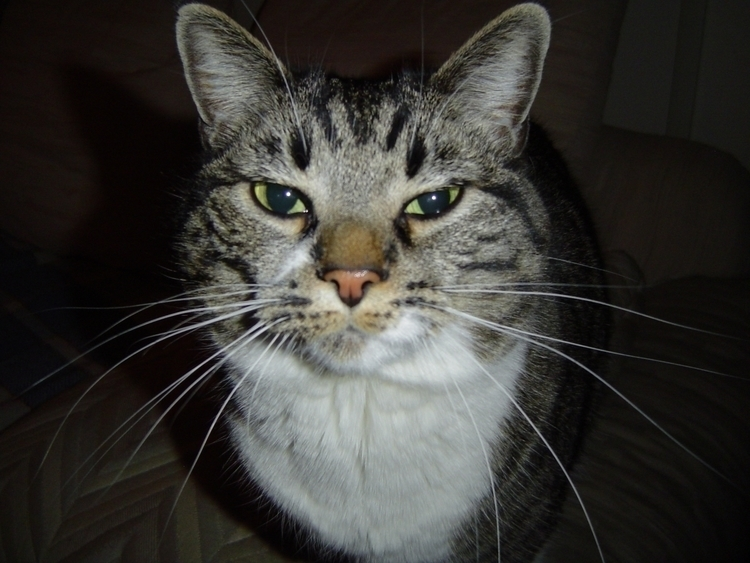Trouble - cat, pets - kelleyandsusan | ello
