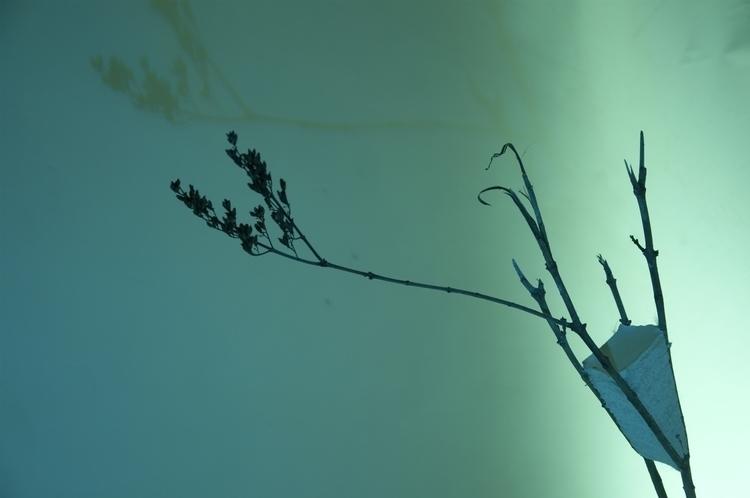 tree, interspace, analysis, concrete - ondrejbelica | ello