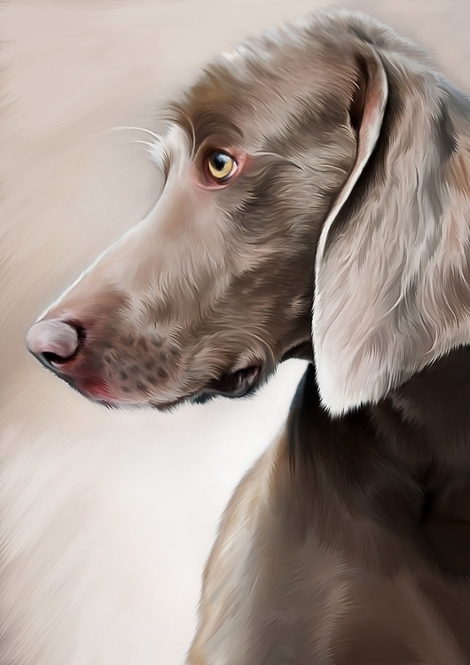 #zjoosh#digital#characterdesign#vector#painting#drawing#sketch#photoshop#illustrator - lily-8364 | ello
