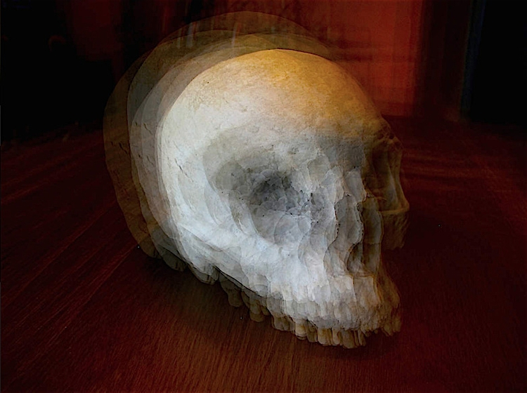 Skull - photography, fineart, anatomy - antonvoid | ello