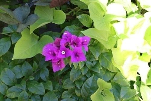Purple Flower - flowers, photography - mandidennie   ello