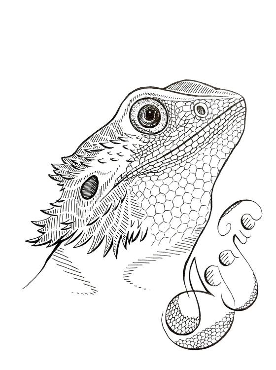 ..Snake - illustration, drawing - agama | ello