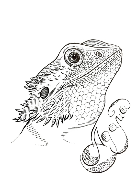 ..Graceful Reptiles....Agama - illustration - agama | ello
