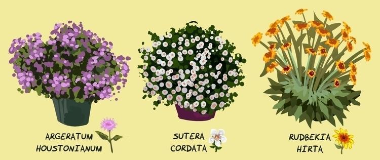 plant studies livestream - plants - rachelpoulson | ello
