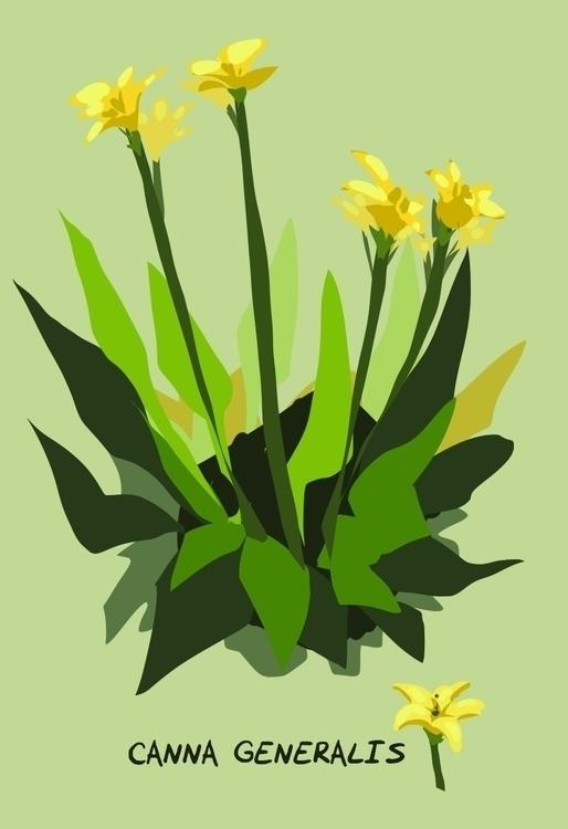 Canna lily study livestream - flowers - rachelpoulson   ello