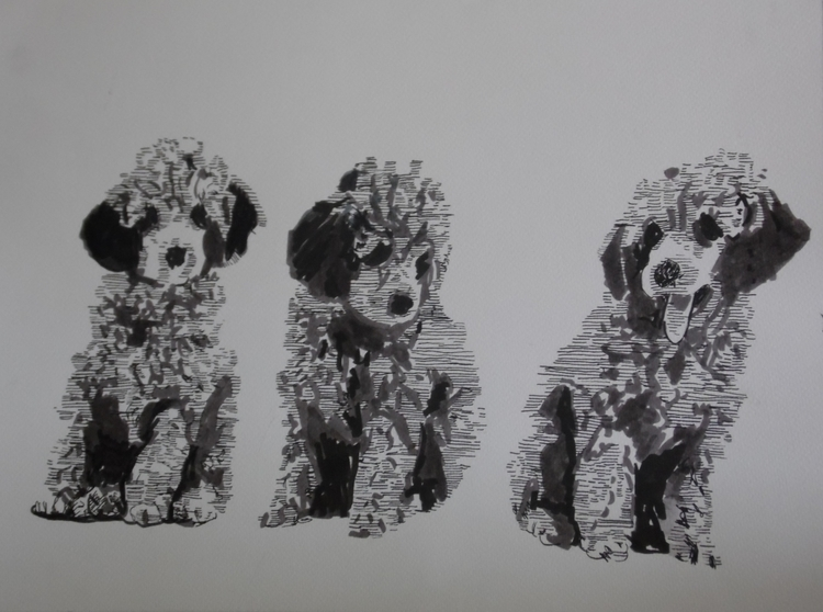 Poodle - illustration, animals, animal - kleckerlabor-5193 | ello
