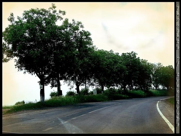 Thof Trees - photography, photoshop - aiakira | ello
