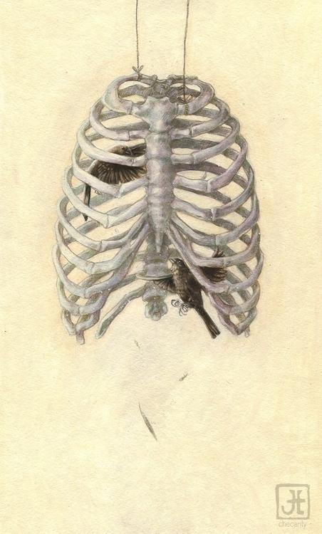 ribcage, birds - checanty | ello