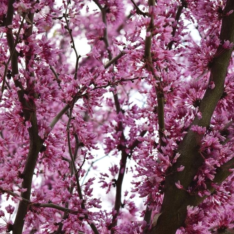 Floral Aesthetic pt.5 - photography - laurentesch | ello