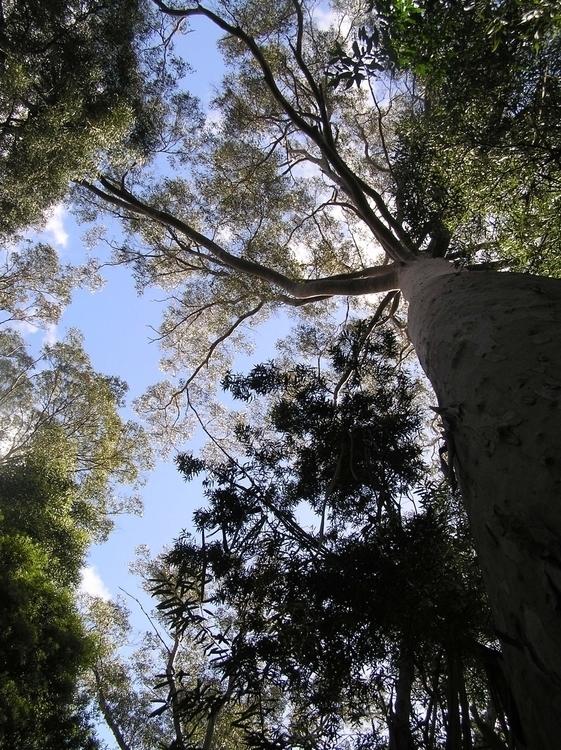 Canopy, Cradle Mountain Tasmani - studiobonnici | ello