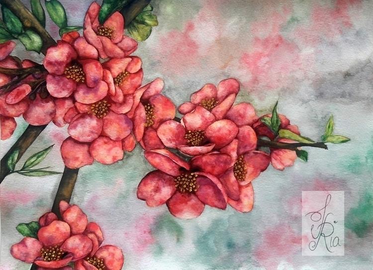 Cherry Blossom - flowers, cherryblossoms - fariafiroz26 | ello