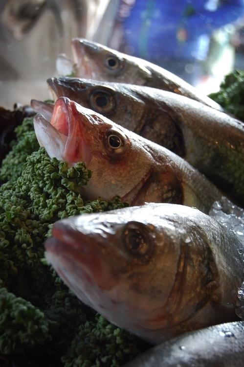 fish, food, photography - santicp | ello