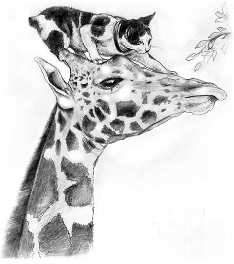 book illustration - Paka Mdogo - maryann-6495 | ello