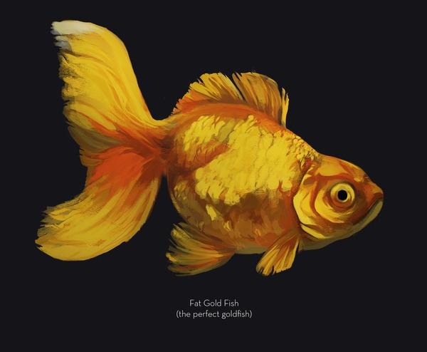 fat fish - goldfish, goldfish, illustration - uru-1113 | ello