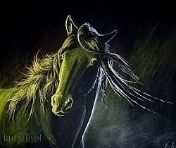 Pastel drawing black paper - horse - kufafle | ello