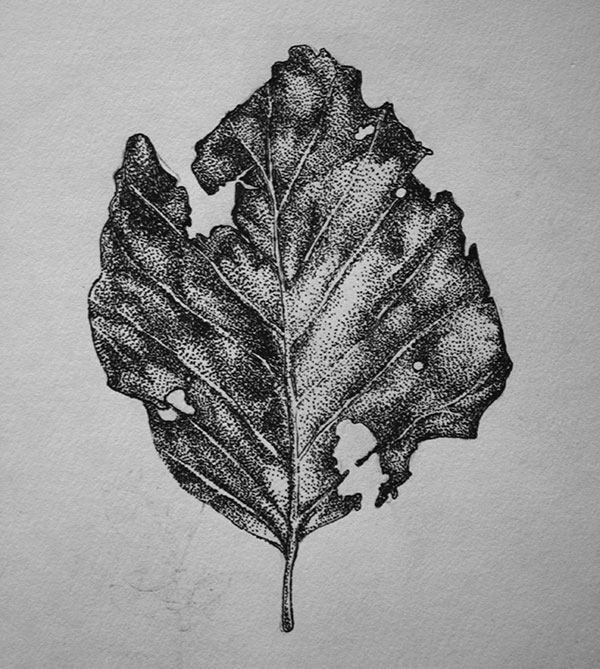 Leaf - illustration, drawing, painting - karolina-4327 | ello