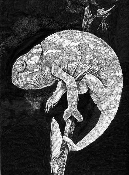 Chameleon pen ink - animals, animal - maryann-6495 | ello
